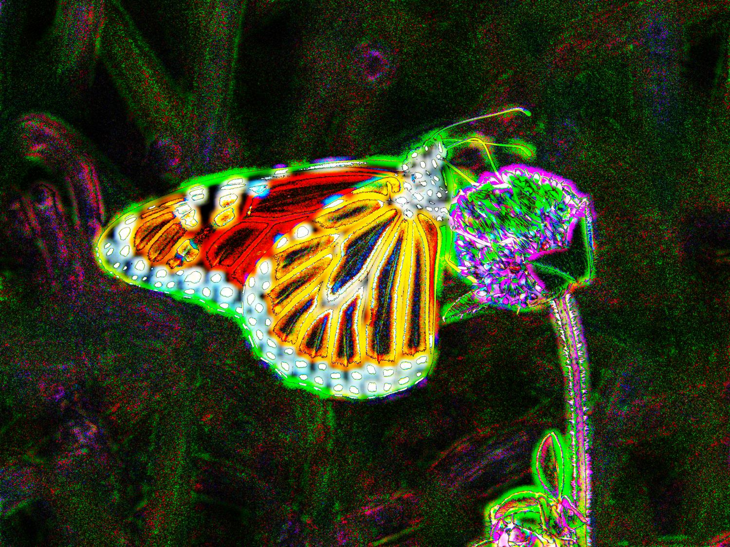 butterfly with a glow - Glowing butterfly</Center><p></p> - Techno-Impressionist Museum - Techno-Impressionism - art - beautiful - photo photography picture - by Tony Karp