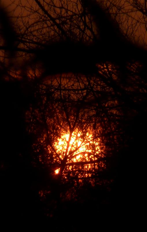 Sunrise through the trees, by Tony Karp - Sunrise through the trees - Techno-Impressionist Museum - Techno-Impressionism - art - beautiful - photo photography picture - by Tony Karp