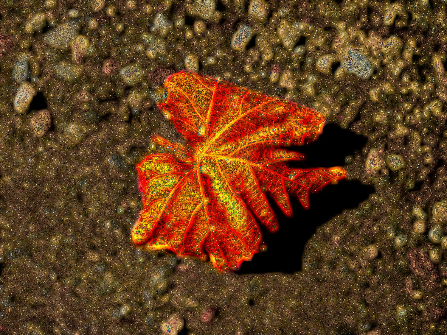 fall leaf with inner glow - Glowing leaf in the fall</Center><p></p> - Techno-Impressionist Museum - Techno-Impressionism - art - beautiful - photo photography picture - by Tony Karp