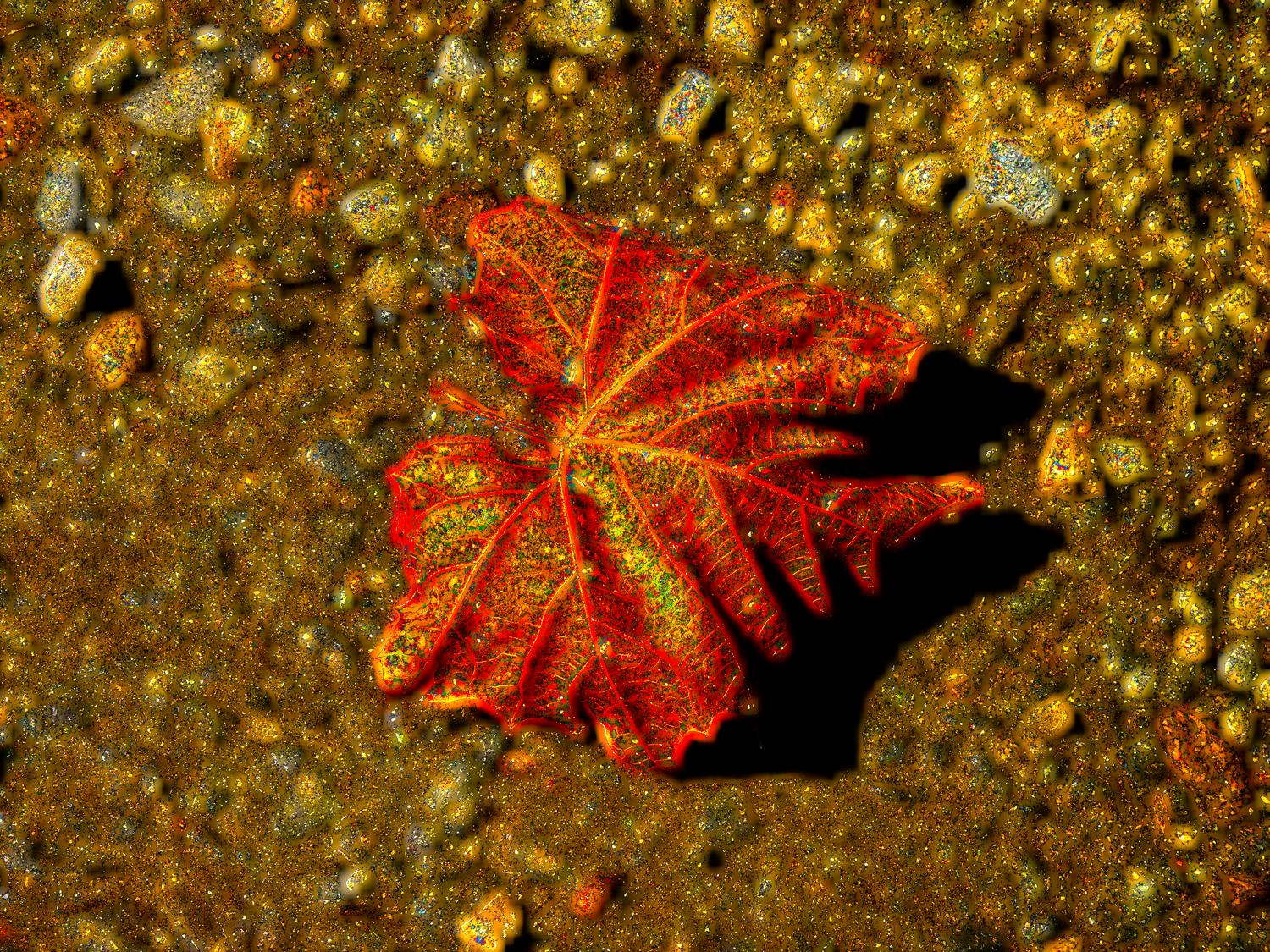 stylized leaf strong red, orange yellow colors - <center>Magical leaf on a dirt road - Techno-Impressionist Museum - Techno-Impressionism - art - beautiful - photo photography picture - by Tony Karp