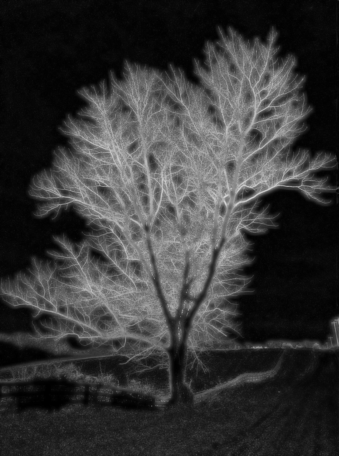 glowing tree on a dark background - Day is night - Techno-Impressionist Museum - Techno-Impressionism - art - beautiful - photo photography picture - by Tony Karp